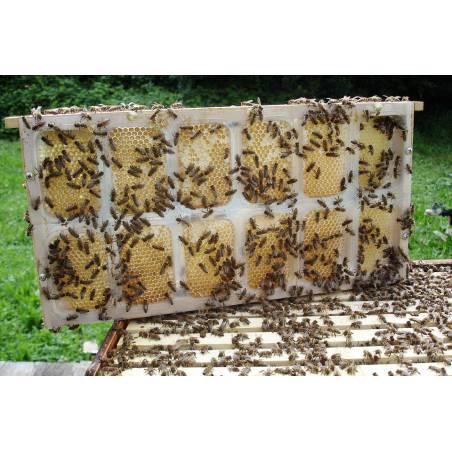 APIBOX miel en pain Eléments de ruches