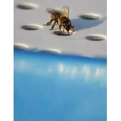 Bees Water feeder Feeders