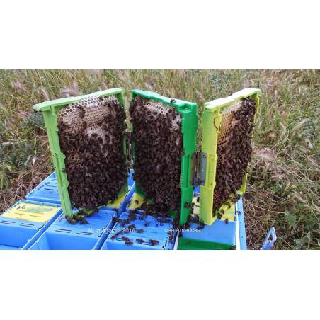 Q8 Mating hive Queen rearing
