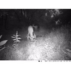 4G Trail camera for beekeepers Apiary monitoring and security