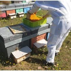 Boîte perforée 2mm pour le pollen Pollen
