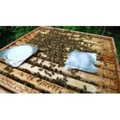 Apiguard Varroa treatments