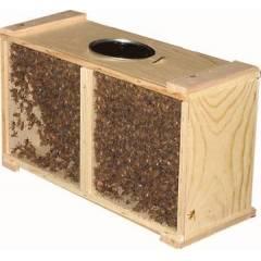 Paquete de abejas ibéricas 1,2 Kg Material vivo