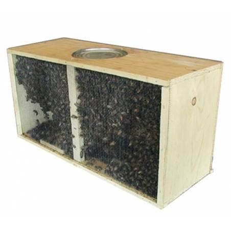 Paquet d'abeilles 1,2kg avec la reine Buckfast Abeilles vivants