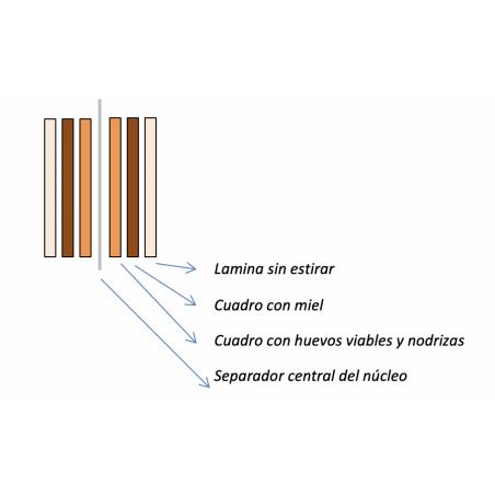 Nucleo ACTUARIA Langstroth 3+3 NÚCLEOS