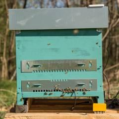 Báscula monitorización individual 3Bee Monitorización y seguridad