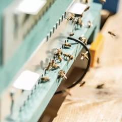 Báscula monitorización Completa Hive-tech 3Bee Monitorización y seguridad