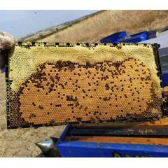 Langstroth Plastic frame Plastic beehives and frames