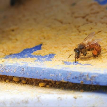 Ultra Bee® Dry 50lb Proteico