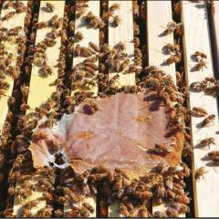 Ultra Bee TOTE Bag 1500lb Proteico