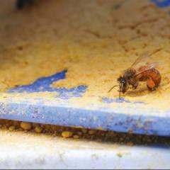 Dry PRO Feeder USA Alimentadores para colmenas