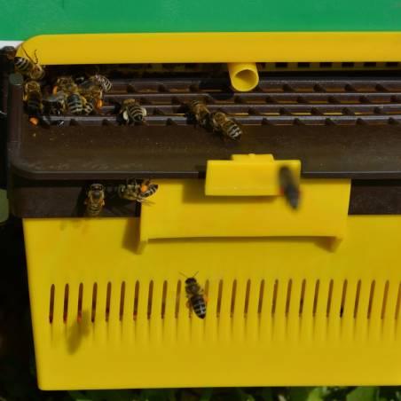 Colector de polen para bases ANEL Cazapolen