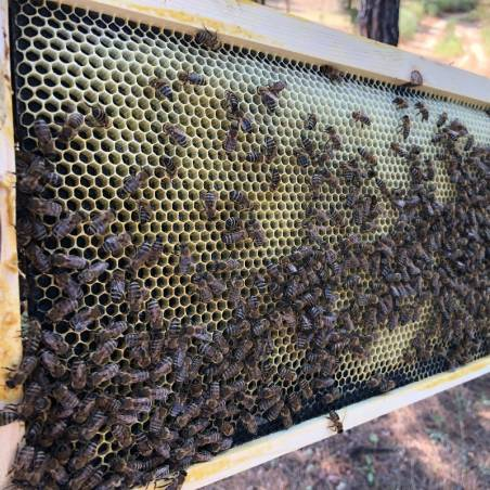 Langstroth Deep Plastic Foundation Plastic beehives and frames