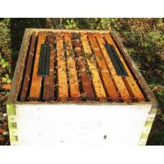 Small Hive Beetle Blaster Trap BEE HEALTH