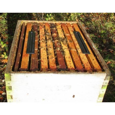 Trampa para escarabajo Beetle Blaster SANIDAD