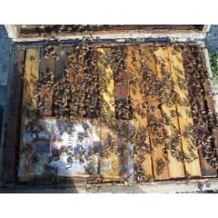 Aliment BeeCOMPLET® printemps 12 Kg Nourrissement