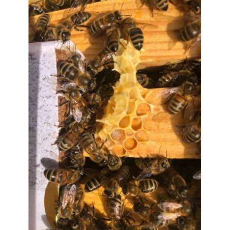 Protein patties Bee-Sacc® Health Alltech Protein pollen subs
