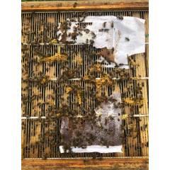 Pâtes protéinée Bee-Sacc® Health Alltech Protéine