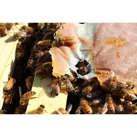 UltraBee® Patties NON-GMO - Bulk pack - 2100 lb (951.3 kg) Protein pollen subs