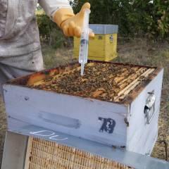 Oxybee 1L Varroa treatments