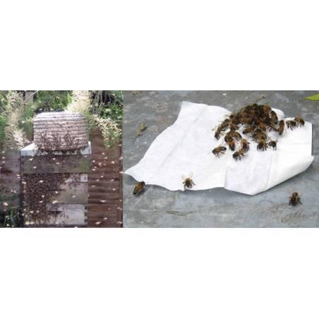 Lingettes attractives à essaims Capture des essaims