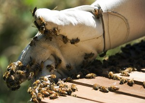 guantes apicultor