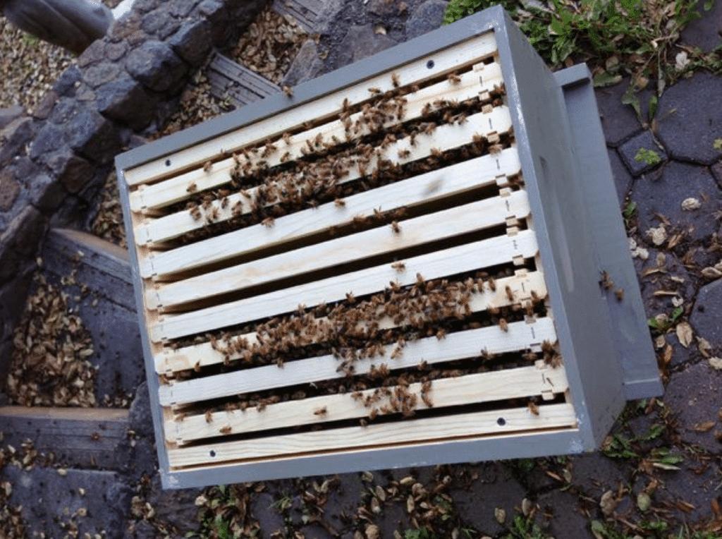 colmena con paquete de abejas