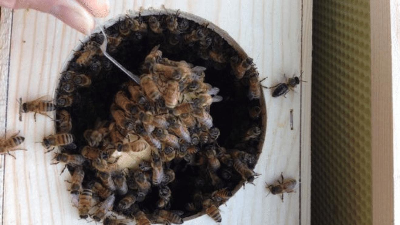 que hacer en caso de enjambre de abejas