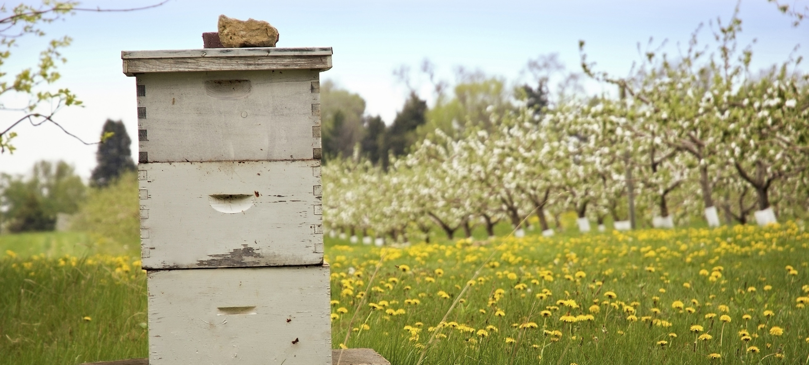 55f1e4a32d66 Cómo comenzar con paquetes de abejas