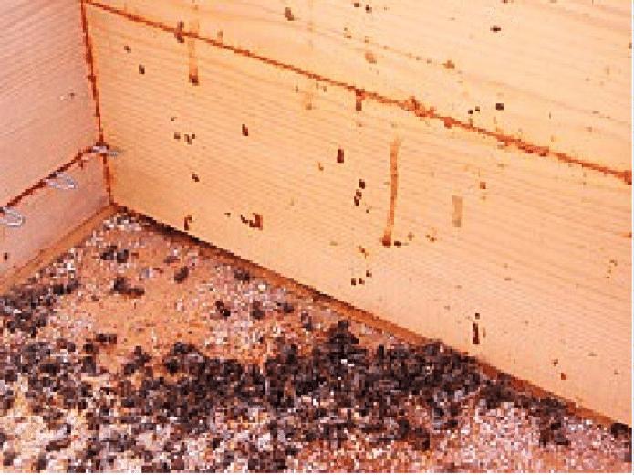 diarrea abejas colmena nosema