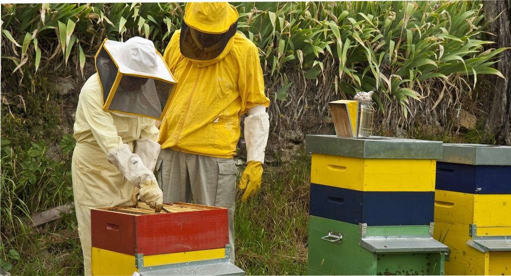 como ser apicultor