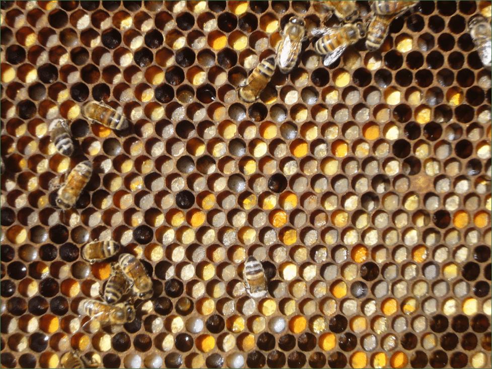 polen-cuadro