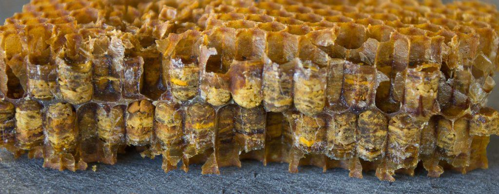 El Pan de abeja: Qué es y cómo cosecharlo
