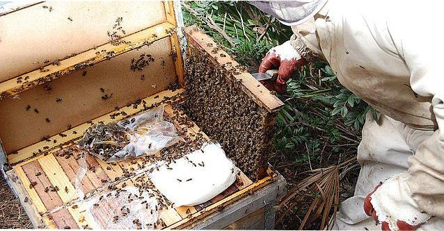 alimentos para las abejas